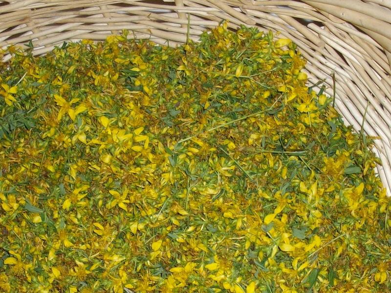 Natural Medicine's - St Johns Wort Flowers