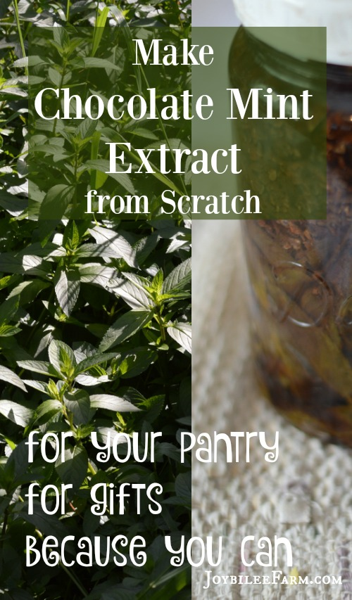 You can make Peppermint Pattie flavoured extracts with just three ingredients -- chocolate mint leaves, cacao nibs, and vodka. Use it in baking, gift it, and make it because you CAN!