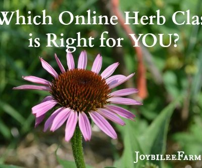 Herbology: Which Online Herbal School is Right For YOU?