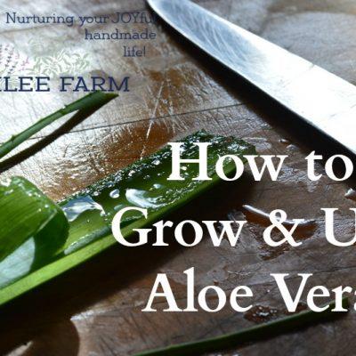 How to Grow and Use Aloe Vera
