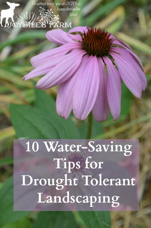 You don't have to give up on a gorgeous yard in drought. You can use the drought tolerant landscaping principles in this book to create a beautiful and productive yard. The book is divided into 5 parts. The first 4 offer tips for creating a beautiful, attractive landscape in spite of a lack of water for gardening. The final section lists 101 plants to use in a water-saving garden. However, of the 101 plants listed, less than 20% are rated for zone 3.