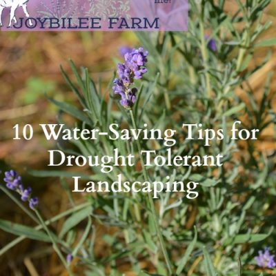 10 Water-Saving Tips for Landscaping