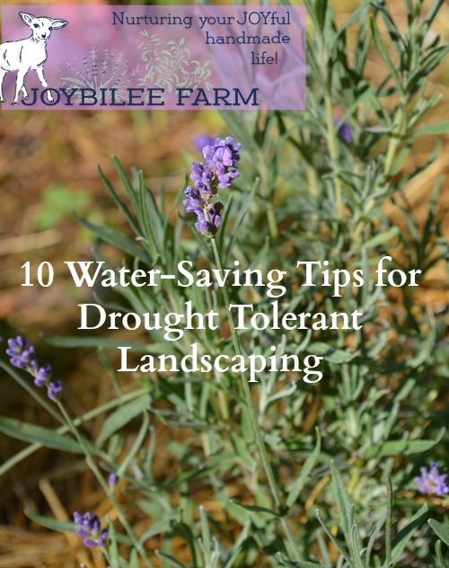 You don't have to give up on a gorgeous yard in drought. You can use the drought tolerant landscaping principles in this book to create a beautiful and productive yard.