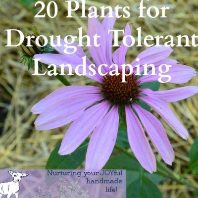 20 Drought Tolerant Plants for Your Zone 3 Garden