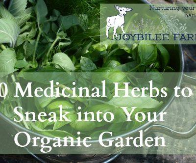 70 Medicinal Herbs to Sneak into Your Organic Garden