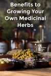 Dried herbs, mortar and pestle plus tincture bottles.