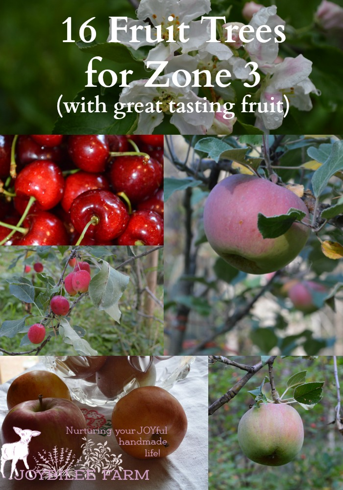 Photo collage of cherries, apples, blossoms, and crab apples.