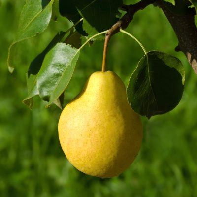 16 Fruit Trees for Zone 3