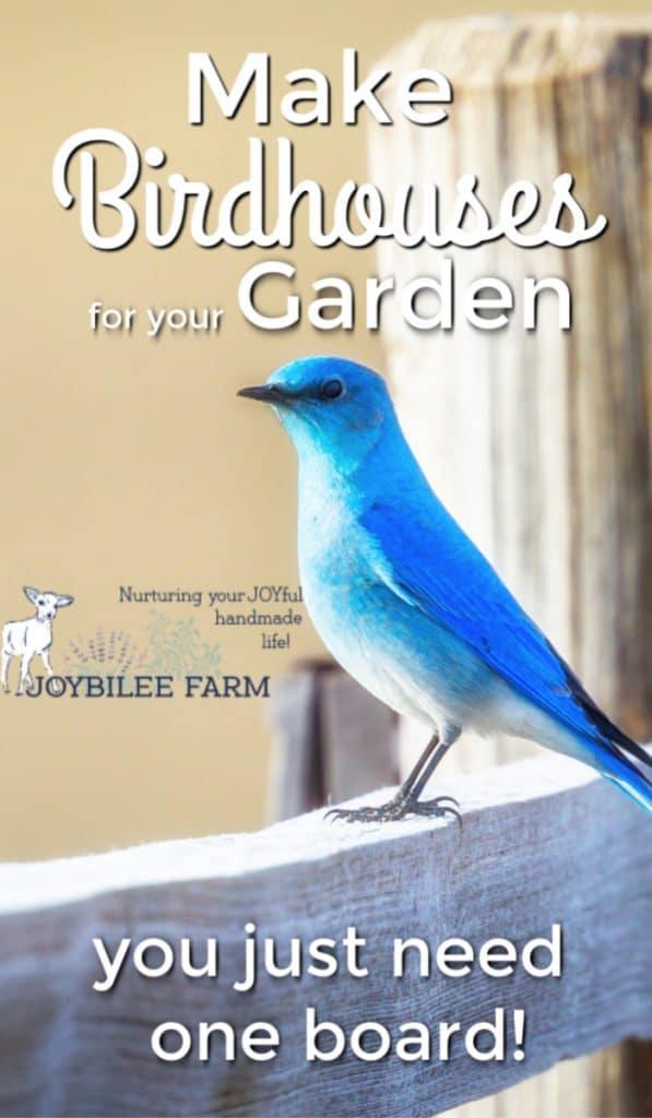blue bird on a fence