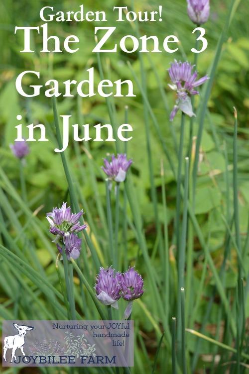 June garden in zone 3 vertical