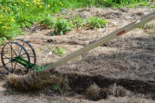 The wheel hoe prepares the rows for planting easily. In a deep mulch system, the mulch is raked aside, exposing the soil, before the wheel hoe passes down the garden bed. In early spring, much of the mulch that was laid down the previous fall is already decomposing, so there is only a light mulch to move aside. I used the cultivator teeth on the double wheel hoe to move the dirt and get the bed ready for planting. Any weeds that had managed to germinate under the thin mulch were nipped off with the cultivator teeth. Then I switched to the right and left plow blades to create a shallow furrow