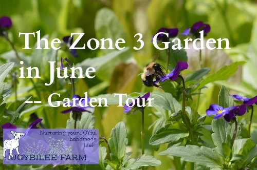 You can grow herbs in your zone 3 garden in June