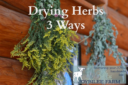 Many fresh garden herbs need to be dried to keep the active constituents potent. The way they are dried has a bearing on the potency of the herb and how long the herb will last in storage. Herbs should retain their colour and their fragrance in storage. Generally dried herbs can be stored for one to two years without loss of potency. Herbs that have lost their fragrance or have faded colour are no longer as potent, and should be replaced with fresh stock.