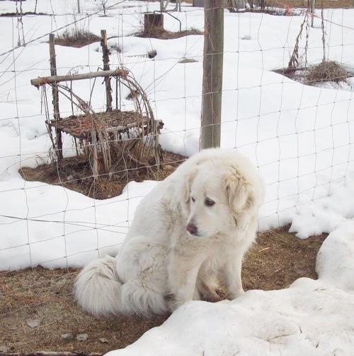 leuko-in-the-snow