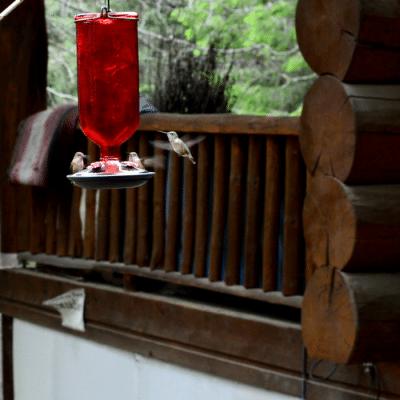 Can I Feed Organic Sugar to Hummingbirds?