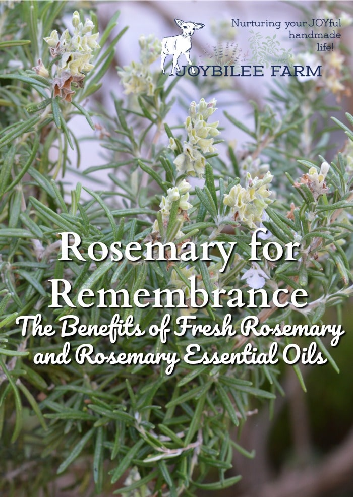 """When you consider rosemary benefits think, """"Rosemary is for remembrance"""" and you'll capture the very best of this amazing culinary and medicinal herb."""