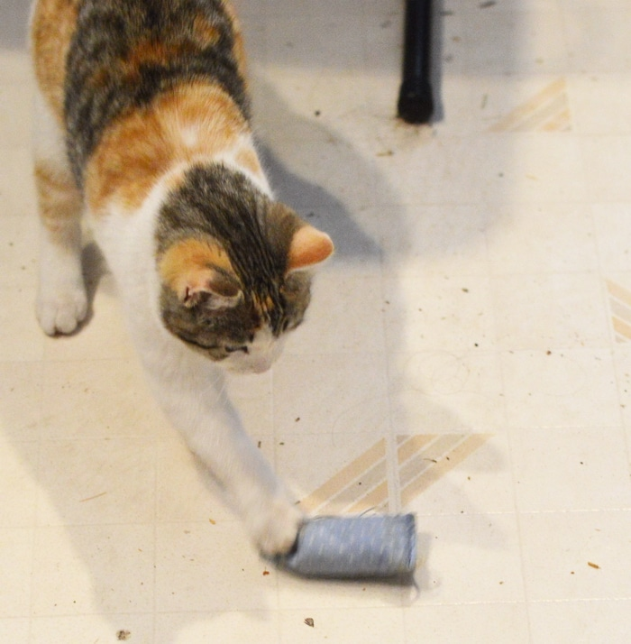Cat and catnip toy mouse