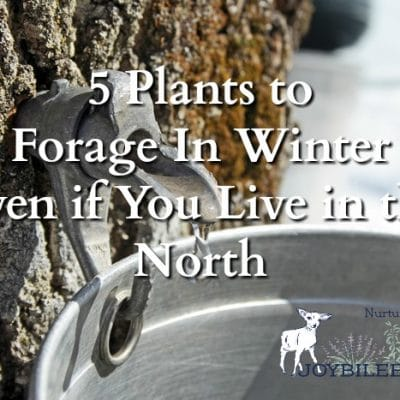5 Plants to Forage In Winter Even if You Live in the North