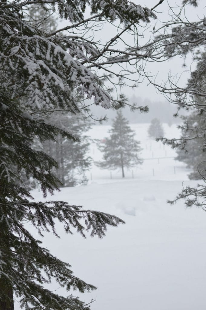 Winter colds and flu season needs fir needle detox bath salts