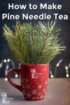 Pine needle branches in a red mug