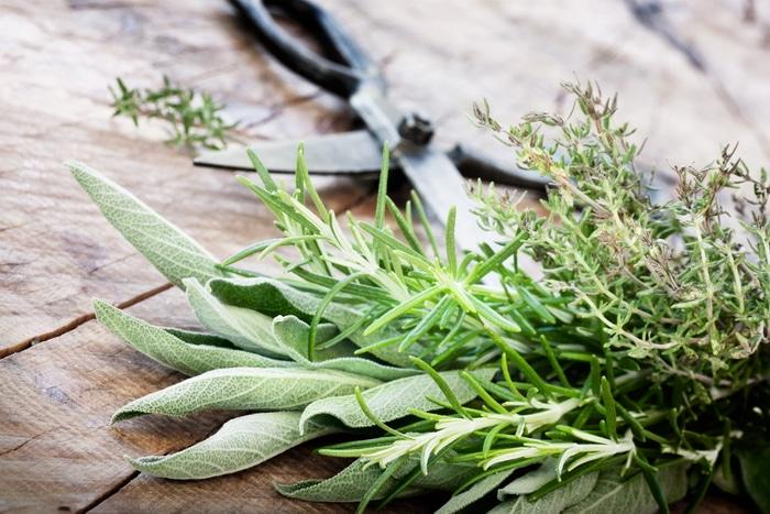 Mediterranean herbs for a medicinal herb garden