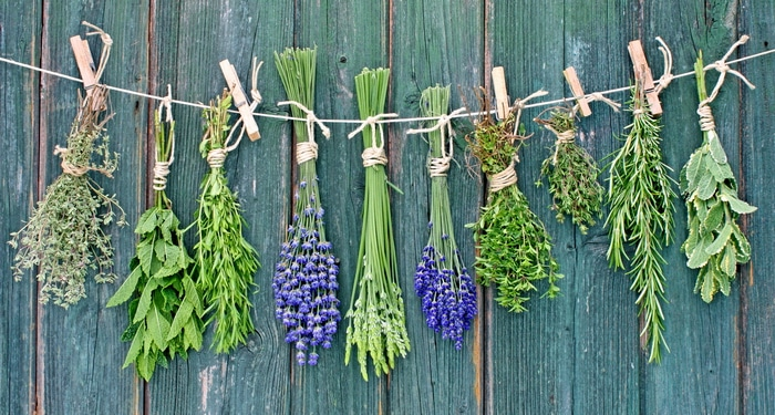 Bunches of herbs drying against a wall.