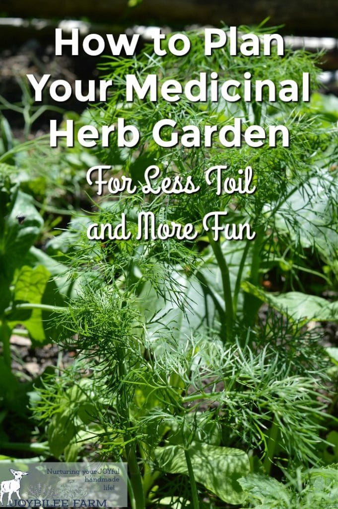 A dill plant growing in a medicinal herb garden