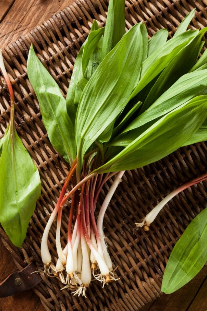 Ramps harvested with the root