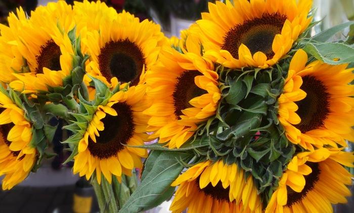 Freshly cut sunflowers in a market