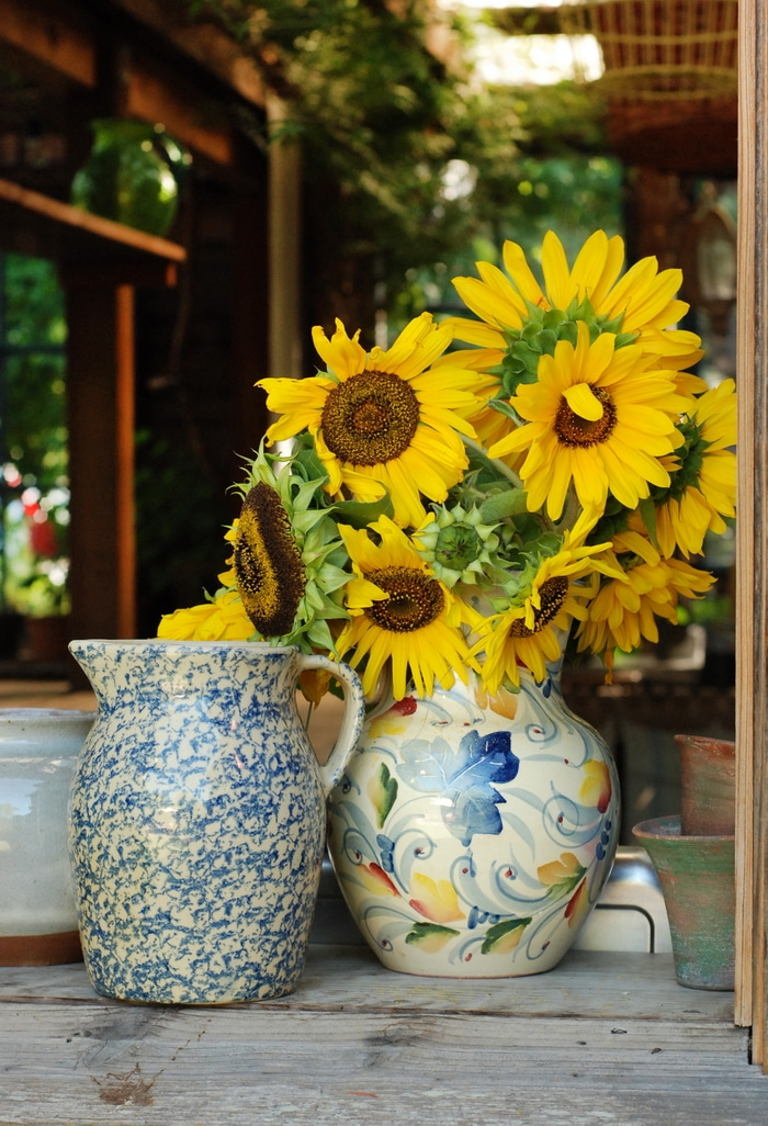 Grow sunflowers for cut flowers