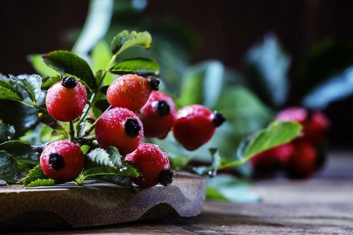 Fresh rosehips medicinal herbs forage