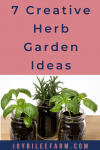 Herbs growing in Mason Jars