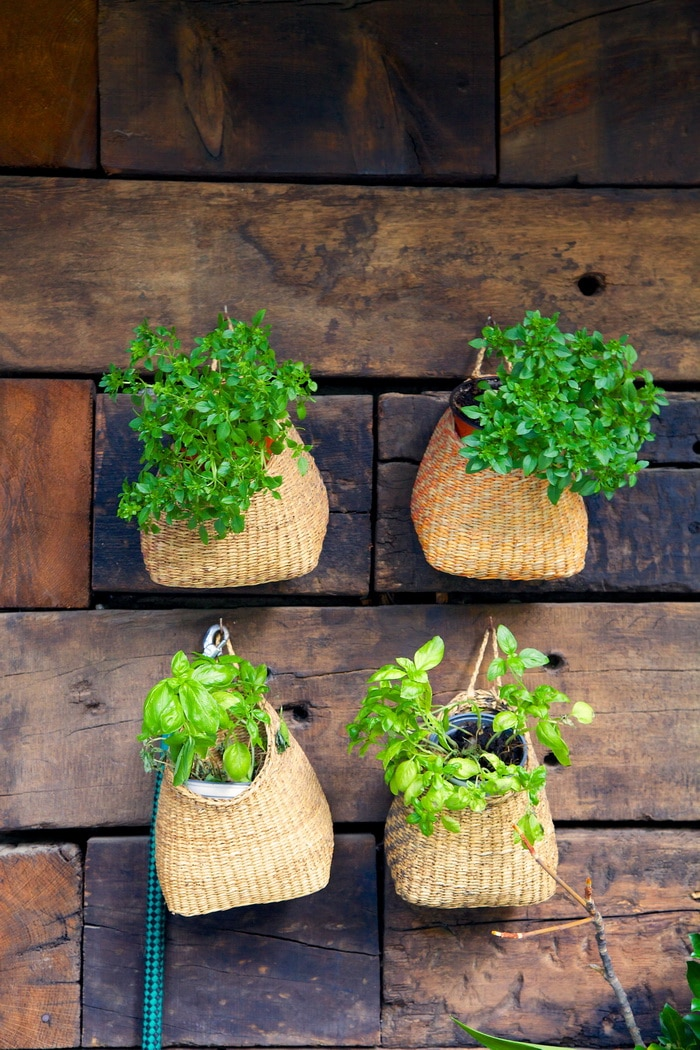 Herbs in baskets on a wall