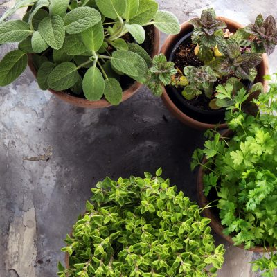 7 Creative Herb Garden Ideas for Growing Herbs in Containers