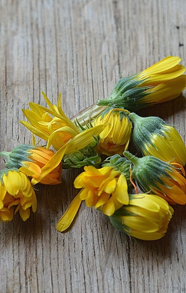Calendula flower heads