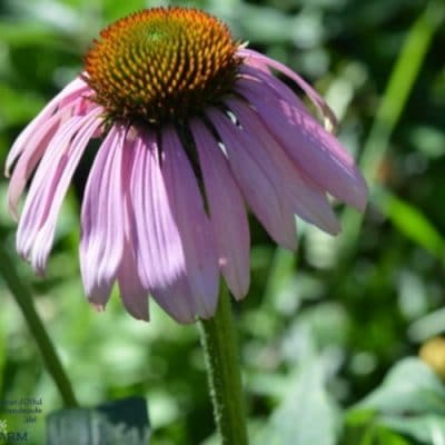 10 Medicinal Herbs to Grow From Seed