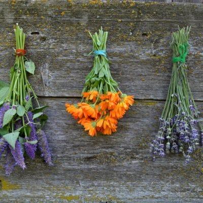 20 Amazing Ways to Grow Herbs for Homestead Abundance