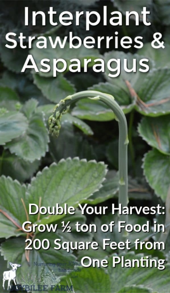 strawberry and asparagus plant