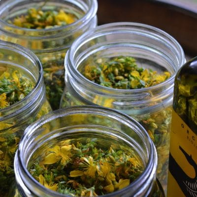How to Make St. Johns Wort Oil for Pain, Strains, and Spasms