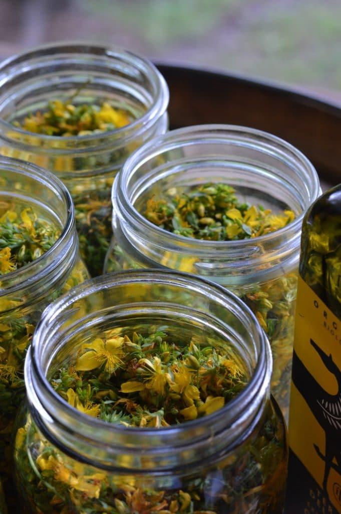 st. johns wort flowers in mason jars