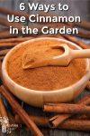 Ground cinnamon in a bowl and cinnamon sticks