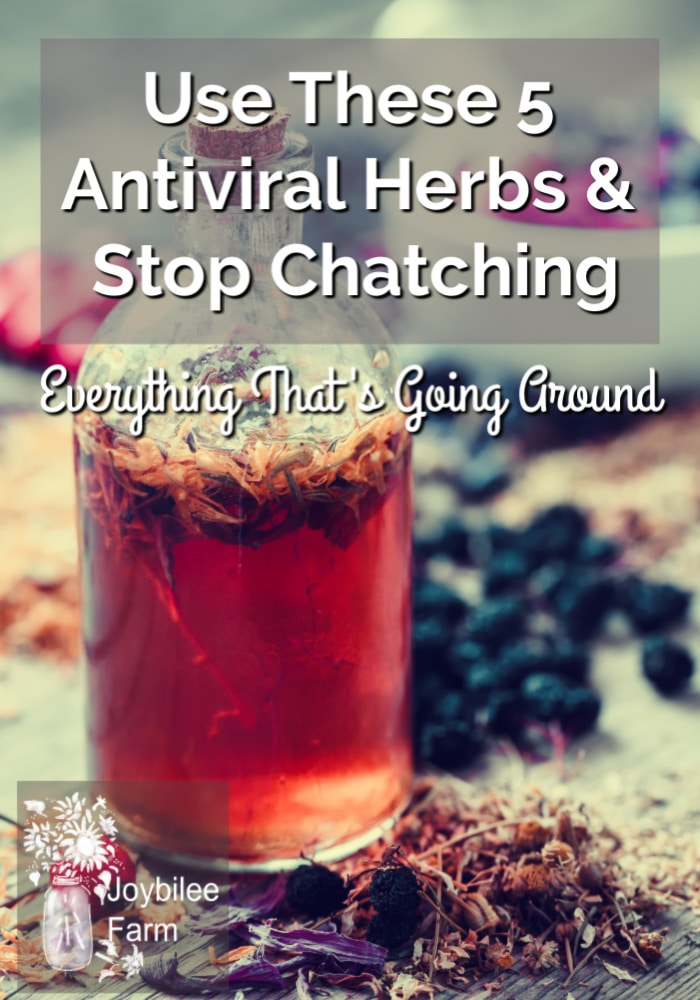 antiviral herbs tincture with berries and herbs scattered around