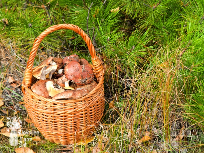 It's hard to find the best gifts for foragers. It's time the forager in your life had a well-stocked kit, specifically designed for foraging. A kit that can be at-the-ready when the wild fruits are ripe.