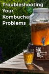 Kombucha in a glass pitcher/dispenser on a picnic table