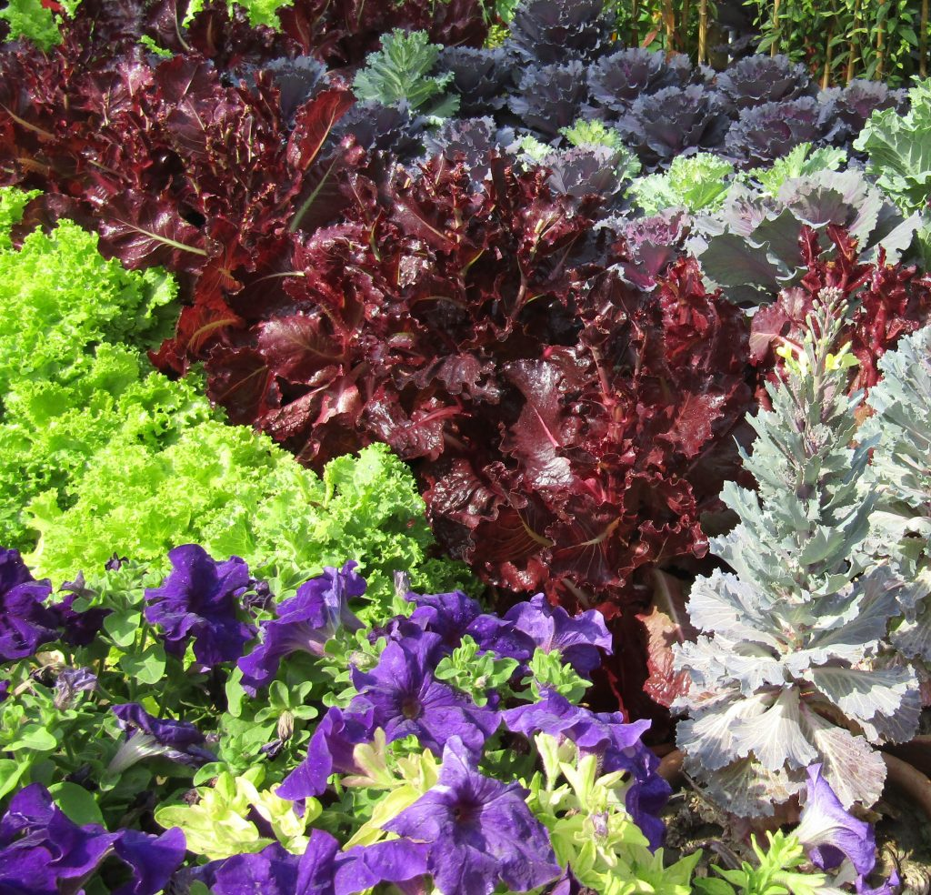 Colorful vegetables growing in a garden