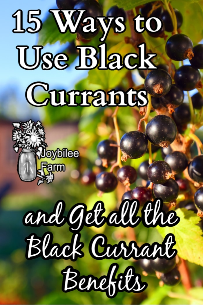 """black currants on a bush in the sun, with the text """"15 ways to use black currants and get all the black currant benefits"""""""
