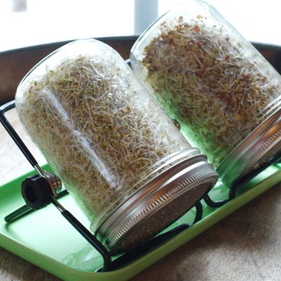 Sprouting seeds in mason jars