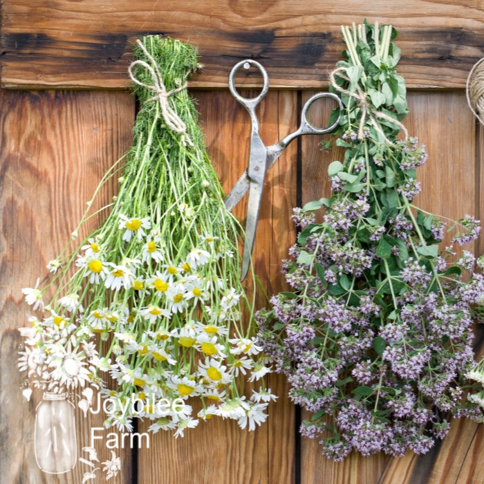 herbs drying on a wooden wall