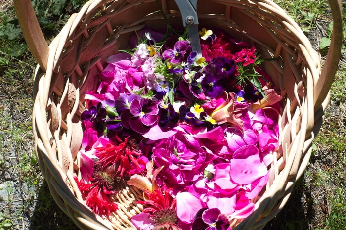 basket of flowers and petals for cookie making