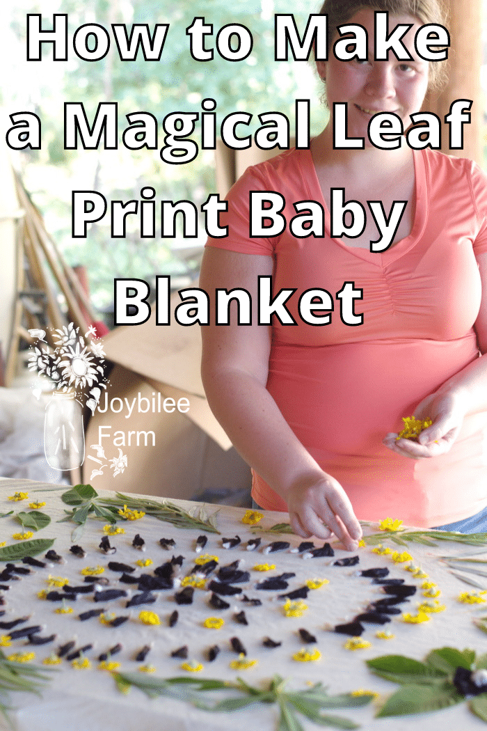 laying out the design for a leaf print baby blanket eco-print.